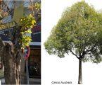 Substituição de Árvores no Parque de Estacionamento junto à EPRAL