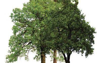 Elvas recebe iniciativas no Dia Mundial da Floresta
