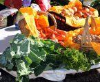 Campo Maior: Feira de Frutos e Legumes de Outono no Jardim Municipal.