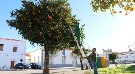 Município recolhe e entrega laranjas  às instituições do Concelho