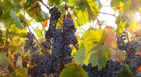Sete vinhos de produtores de Reguengos de Monsaraz premiados no concurso La Selezione del Sindaco