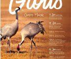 Campo Maior: Segunda edição do «festival dos Grous»
