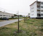 Mais de 500 árvores plantadas em Évora