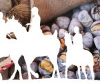 Estremoz: VII Festa do Cavalo