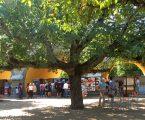 Elvas: Jardim Municipal e Jardim das Laranjeiras encerrados