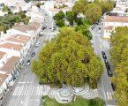 Plátano de Portalegre, o Bem-Amado, é o grande vencedor do concurso nacional Árvore do Ano 2021